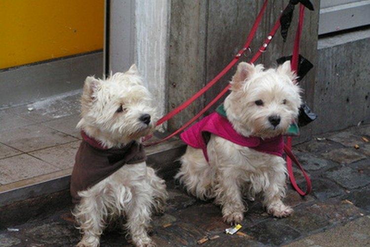 Los hallazgos clínicos en perros con cáncer de hígado varían dependiendo del tipo de tumor.