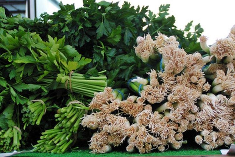 El cilantro es una hierba principal en la cocina mexicana.