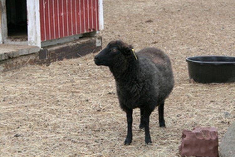 Puedes criar algunas cabras lecheras o bien ovejas por su lana.