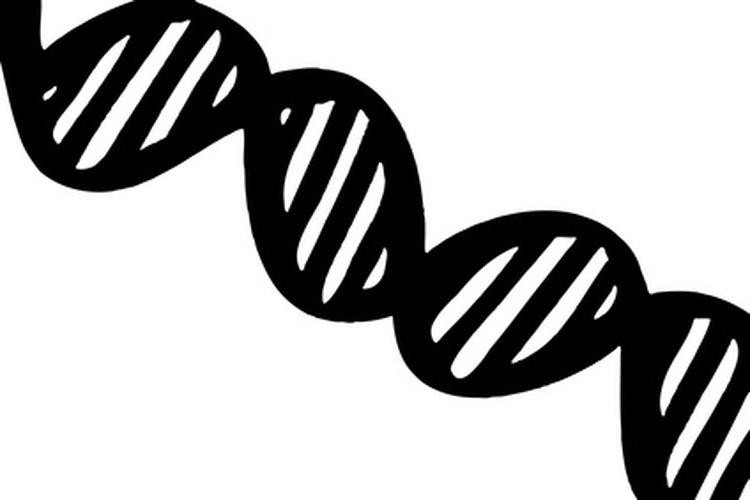 Representación esquemática de una molécula de ADN.