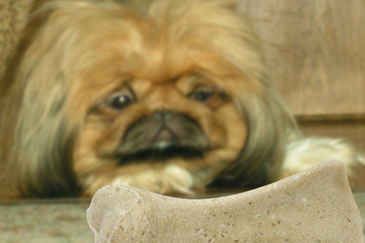 Resultado de imagen para Reflujo ácido en perros: