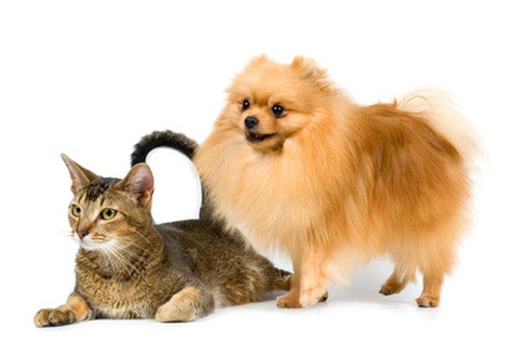 El producto es utilizado en perros y gatos.
