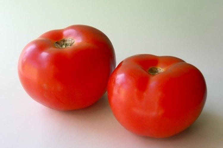El cultivo sólido puede producir tomates gigantes.