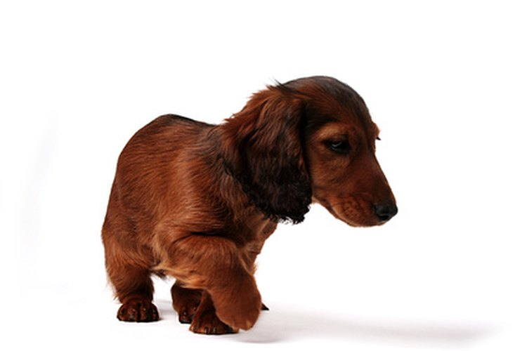A los perros les encanta comer, y alimentar su apetito con comida saludable es importante.