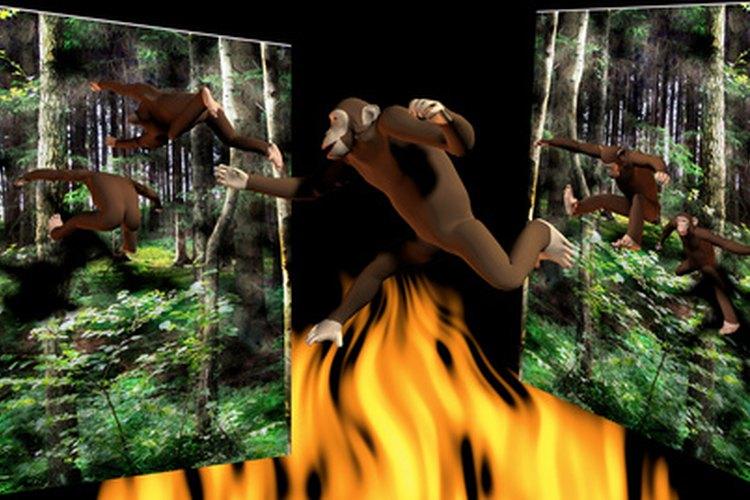 Miles de especies de flora y fauna se han perdido por la deforestación del hombre en la selva amazónica.