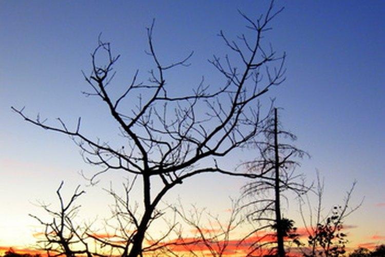 Los árboles comienzan a crecer cuando la luz del sol dura más tiempo.