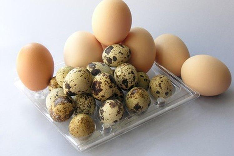Las gallinas saludables y libres de estrés deberían poner huevos en abundancia.