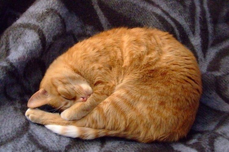 Los gatos están sujetos a una variedad de enfermedades conforme envejecen porque sus sistemas inmunológicos no son tan fuertes como lo fueron una vez.