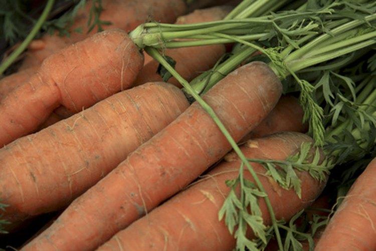 """Zanahorias """"thumbelina"""" cultivadas en macetas."""