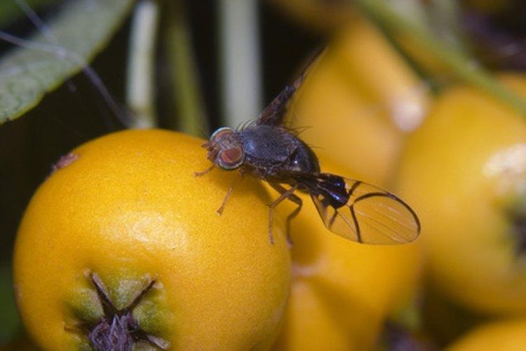 Por qu hay muchos mosquitos en mi casa - Como sacar las moscas de la casa ...