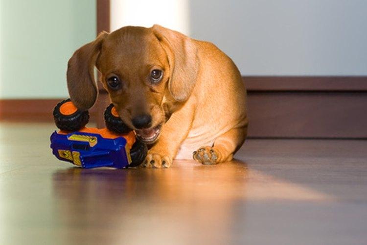 Los cachorros jóvenes recibirán suspensión Panacur en forma de líquido.