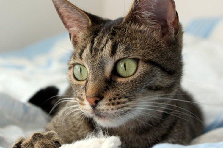 Quizá te sorprendas si tu gato tiene hipo.