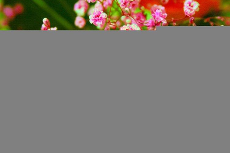Las plantas respiran dióxido de carbono.