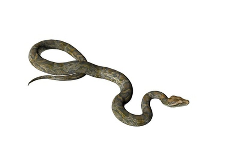 Levanta o controla una serpiente con herramientas caseras.