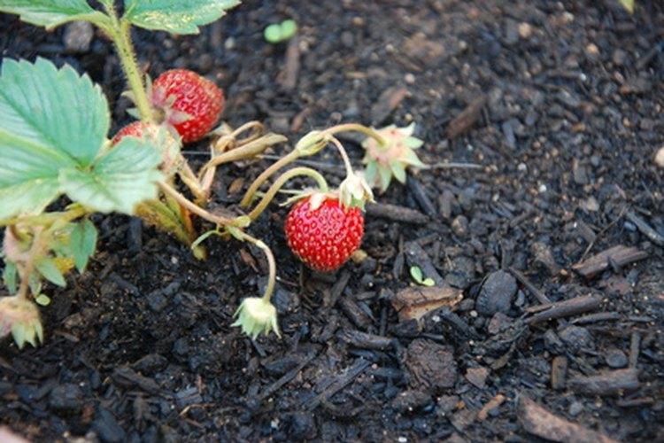 Las plantas necesitan tierra rica en nutrientes para vivir.