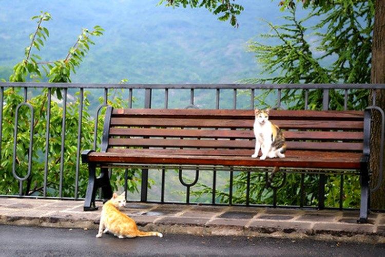 Los gatos de interior viven mucho más tiempo que los gatos al aire libre que tienen una vida útil de unos dos años.