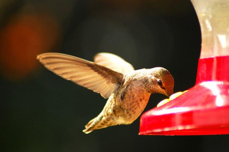 Los colibríes buscan el néctar y polinizan las flores.