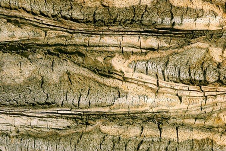 La reproducción de la mayoría de plantas se realiza por división de raíces bajo la superficie.
