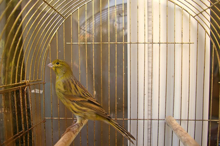 En la naturaleza, las aves tratan de ocultar la enfermedad y harán lo mismo en tu casa.