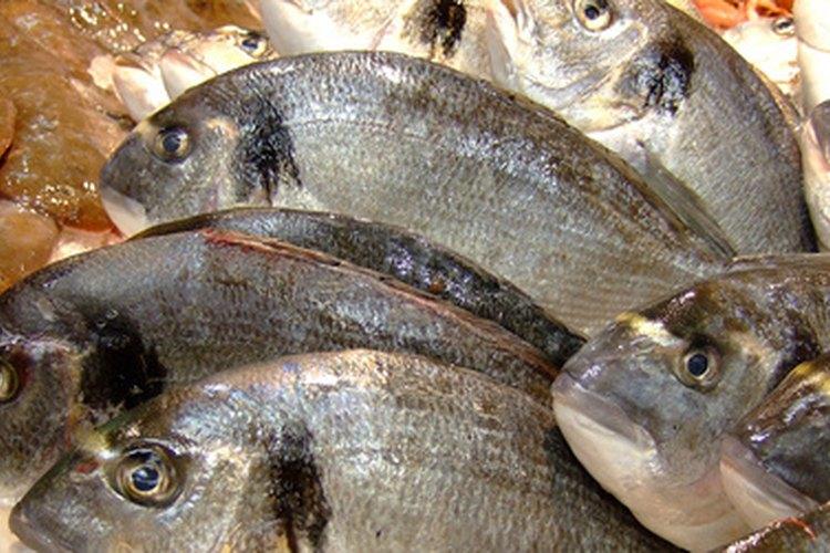 La piscicultura es también conocida como acuicultura.