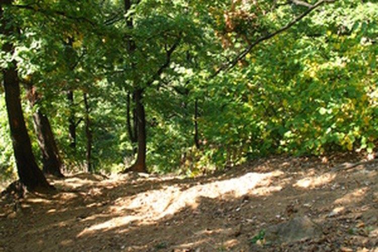 El suelo de la selva de hoja caduca es un ejemplo de una red alimentaria de detrito.