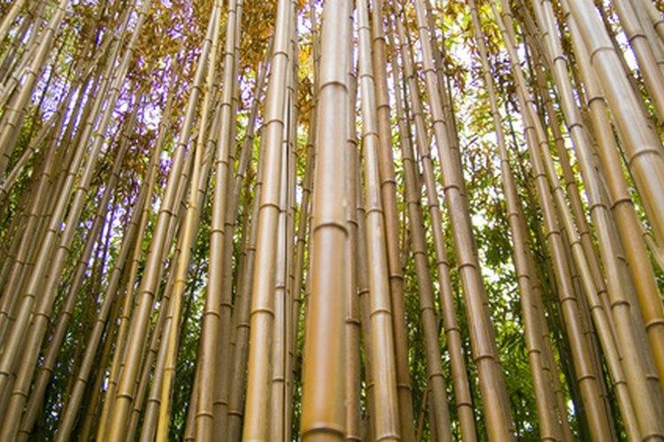 El bambú es un material sustentable y robusto.