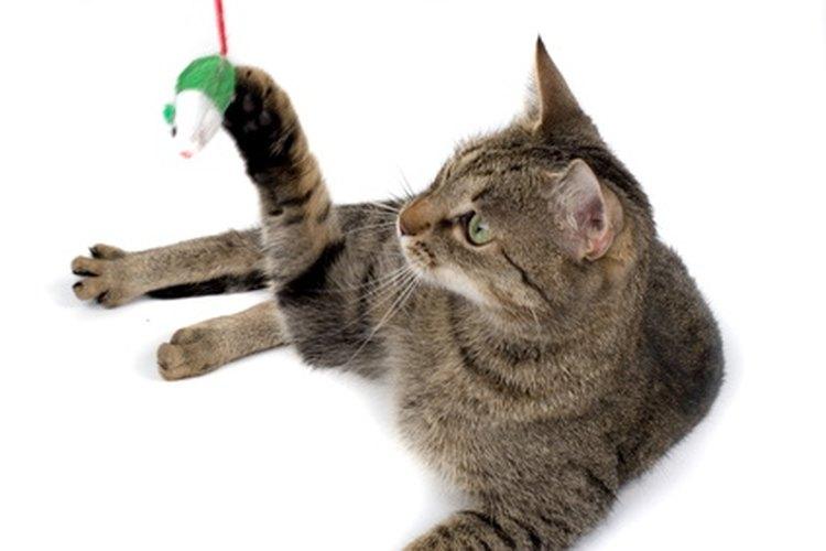 Trata de que tu gato juegue contigo para mantener sus músculos fuertes.