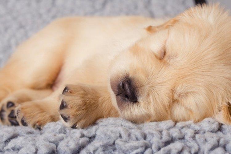 A todo el mundo le gusta más un perro que no se despierta demasiado temprano.