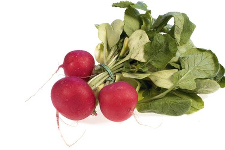 Entre los vegetales de crecimiento rápido se incluyen los rábanos, lechuga, judías verdes y calabacines.