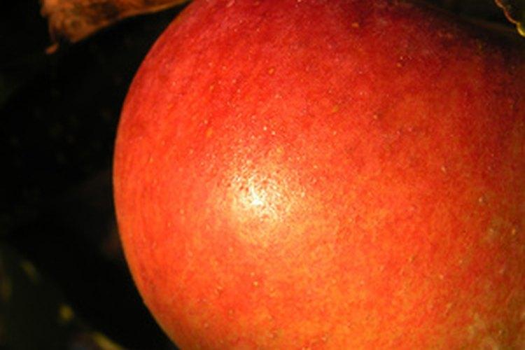 Vale la pena aprender a cuidar manzanos Fuji.
