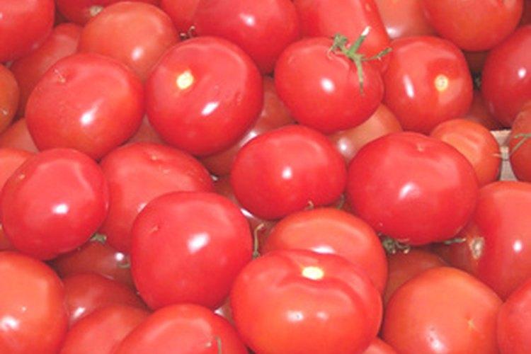 Los tomates serán más fructíferos si se plantan en el suelo adecuado.
