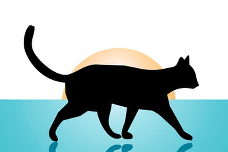 La estructura de la cadera del gato se inclina hacia delante para caminar sobre las cuatro patas.