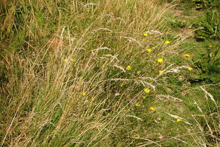 Los herbicidas selectivos no atacan a las plantas del tipo de los pastos, tales como el trigo y la cebada.