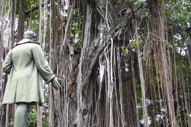 Las lianas inundan las regiones de selva tropical densamente arboladas.