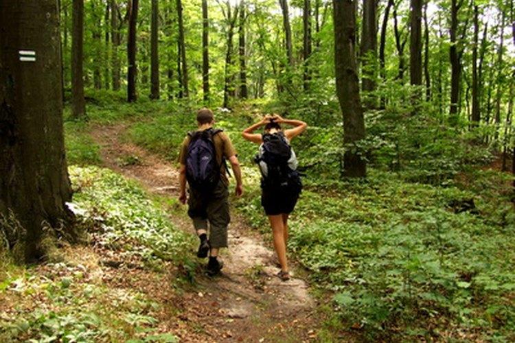 Una buena forma de disfrutar el verano es dar un paseo por el bosque.