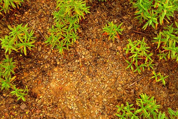 El fósforo es vital para el crecimiento y la salud de las plantas.
