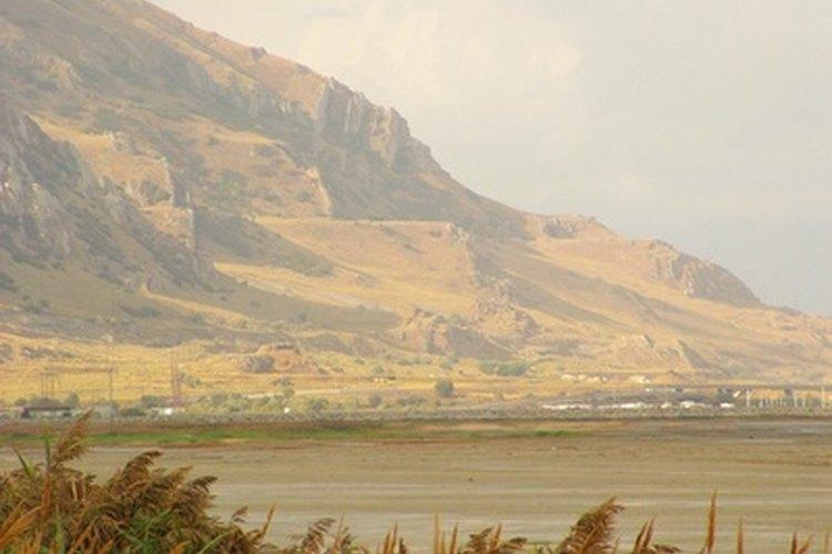 El capulín es un árbol común en Utah.
