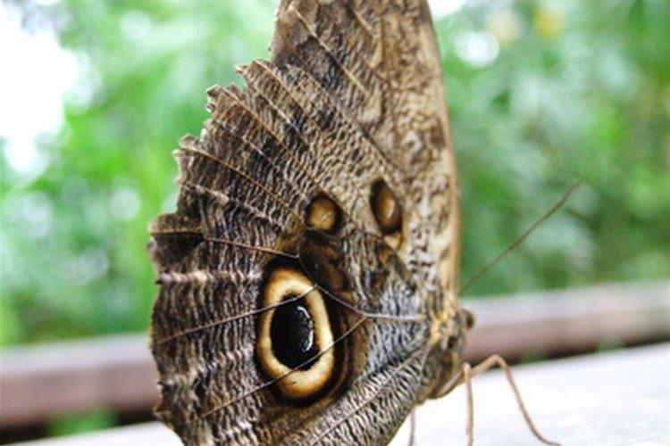 La gente atribuye diferentes significados a una mariposa que entra a una casa.