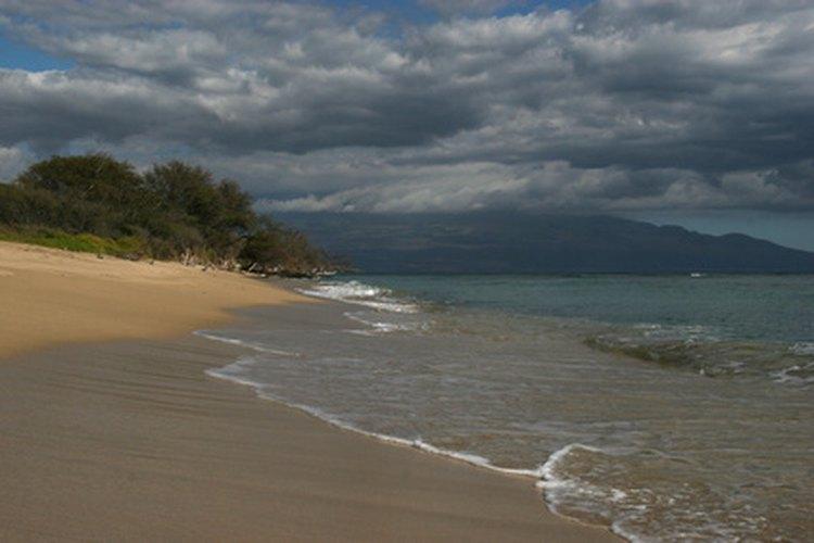 El aislamiento de Hawaii permitió que se dieran especies de animales y plantas únicas.