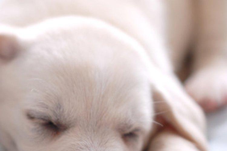 Proporcionarle al perro un lugar para dormir muy cómodo es esencial.