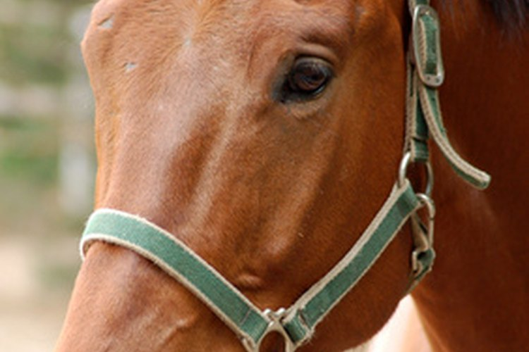 A veces es necesario que lo caballos usen máscaras.