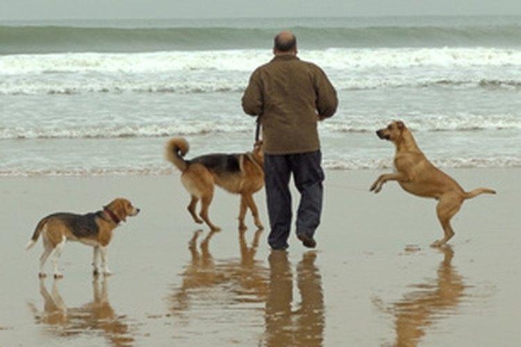 Los perros y los sarcomas