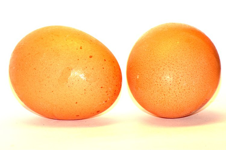 Los huevos crudos mejoran el pelo de los perros.