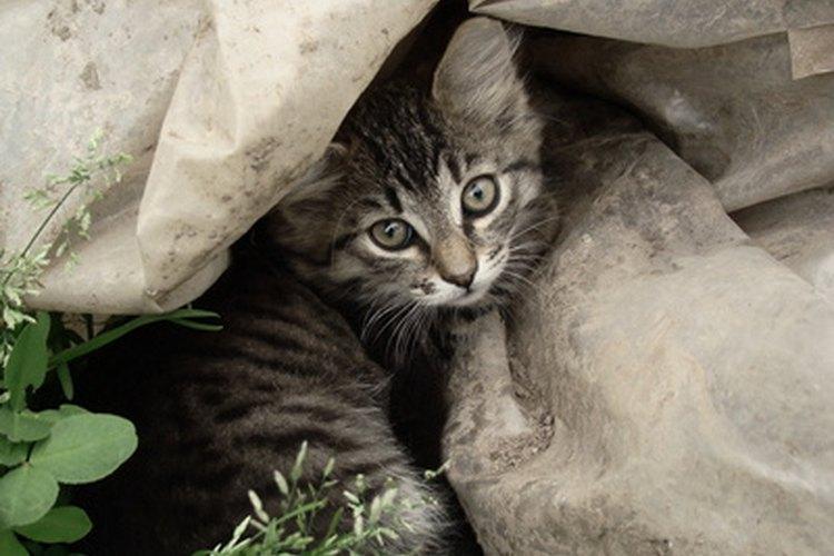 La biología de los gatos está llena de datos asombrosos.