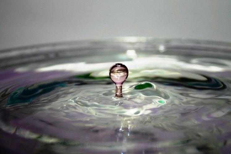 Los niños pueden ver los organismos microscópicos que se encuentran en el agua.