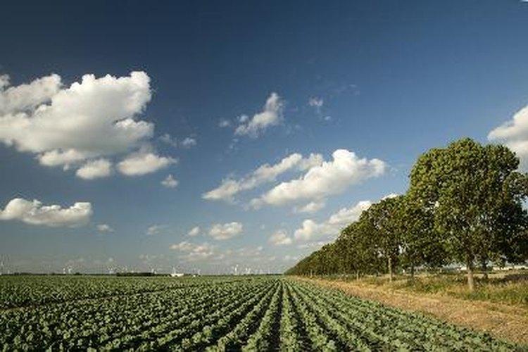 Hay una larga historia de uso de productos químicos para el control de plagas en la agricultura.