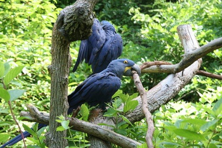 La Amazonia contiene más de la mitad de todas las especies de aves que se encuentran en Sudamérica.