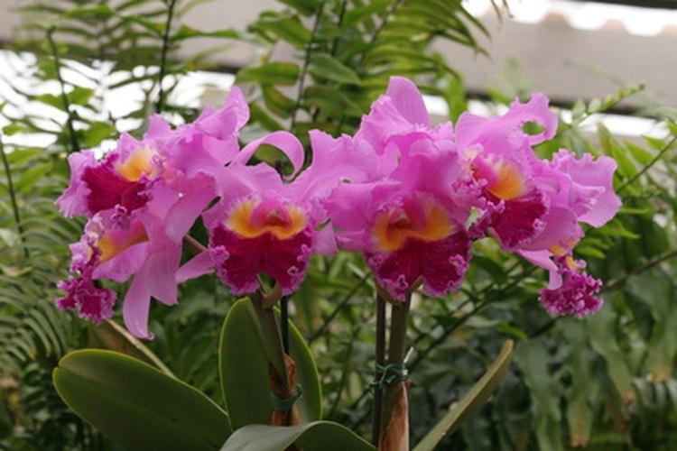 cu les son las plantas nativas de venezuela