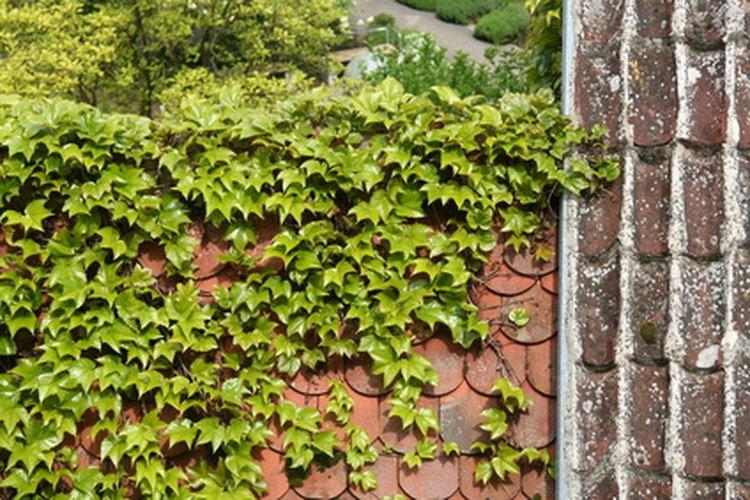 Los jardines verdes de techo son buenos para el medio ambiente, pero también tienen sus problemas.