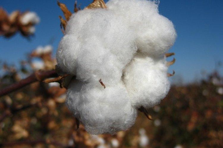 El algodón es un componente principal de la ropa convencional.